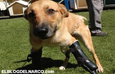 Fotos de un Perrito que fue torturado por los Zetas, pero una fundación lo rescató...